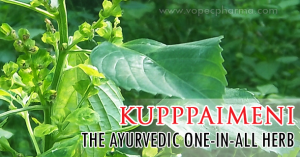 kupppaimeni-the-ayurvedic-one-in-all-herb