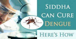siddha-can-cure-dengue-here