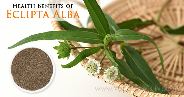 Health-Benefits-of-Eclipta-Alba