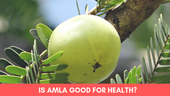 amla-is-good-for-hair