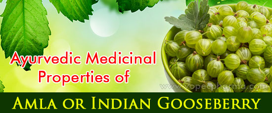 Amla or Indian-Gooseberry