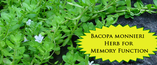 Bacopa monnieri Herb for Memory Function