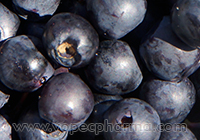 Blueberry Juice May Boost Memory