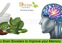 Healthy Ayurvedic Brain Boosters to Improve your Memory