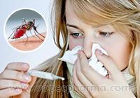 Dengue Fever: Causes, Symptoms, and Treatment