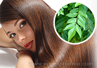 How to Use Curry Leaves for Hair Care