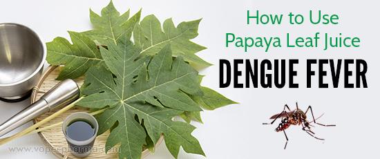 Papaya Leaf Juice for Dengue Fever